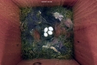Vier Eier
